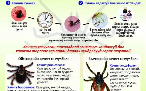 Хачигт халдварт өвчнөөс урьдчилан сэргийлье!