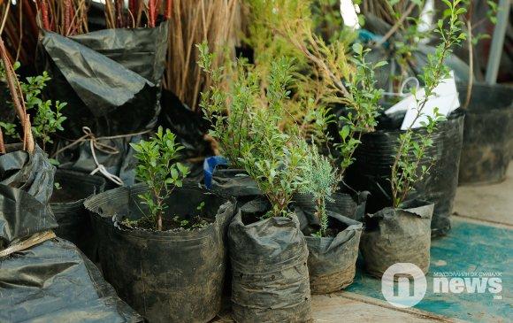 НИТХ дахь АН-ын бүлэг өрх бүр таван мод ургуулахыг уриалав