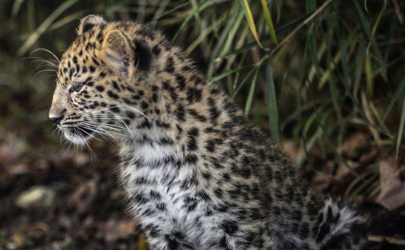 Дэлхийн нэг сая төрөл зүйл амьтан устах аюулд оржээ