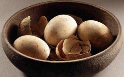 Өндөг үйлдвэрлэлийн түүх