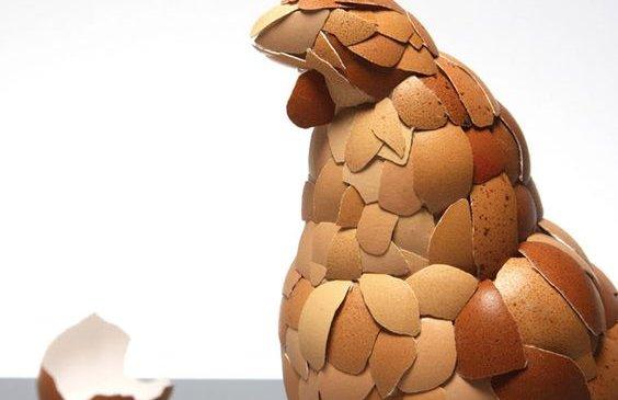 Өндөгний хальсыг иддэг гэнэ үү?