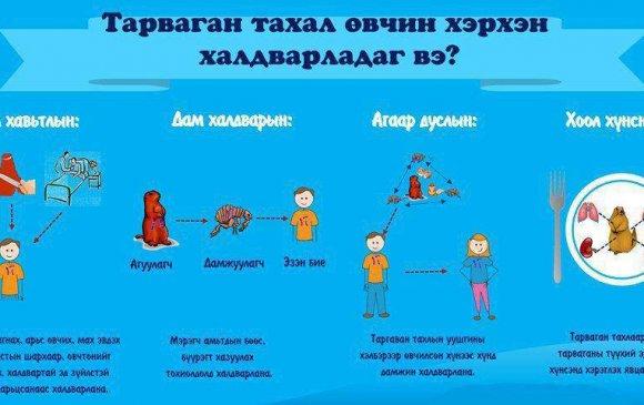 Тарваган тахал өвчний халдварлах зам, урьдчилан сэргийлэх аргууд