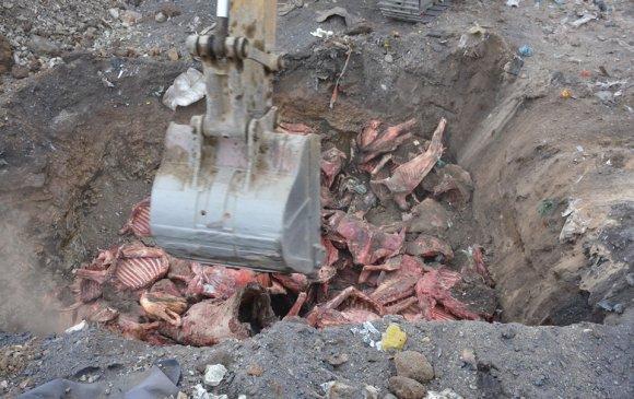 Үхсэн малын 20 тонн мах устгав
