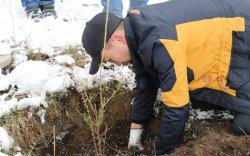 Баянзүрх хайрханыхаа өвөрт 200 ширхэг улиас модыг нэмж тарив