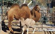 Амьтны хүрээлэнгийн  ботгонд монгол нэр хайрлана
