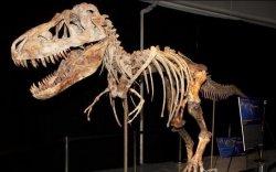 """""""Тираннозавр батаар""""-ыг Монголын талд хүлээлгэн өгөв /2013.05.07/"""