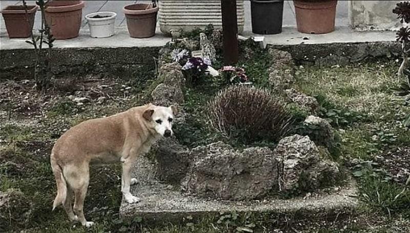 Эзнийхээ булшны дэргэд 10 жил амьдарсан нохойг нойрсуулжээ