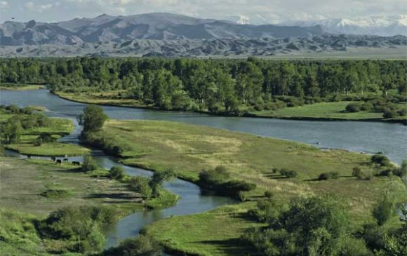 Quiz: Монгол оронд ургадаг модод