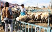 Шөлний хонь 100-300 мянган төгрөгийн үнэтэй байна