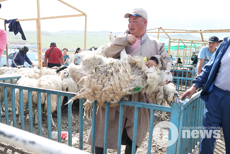хонины үнэ (2)