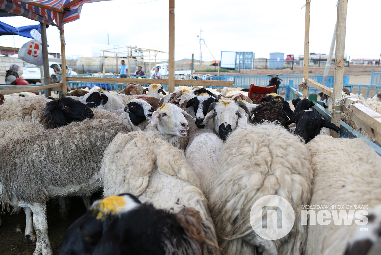 хонины үнэ (3)