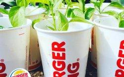 Бургер кинг сүлжээ ресторан байгаль орчинд ээлтэй шийдлийг дэмжин ажилладаг