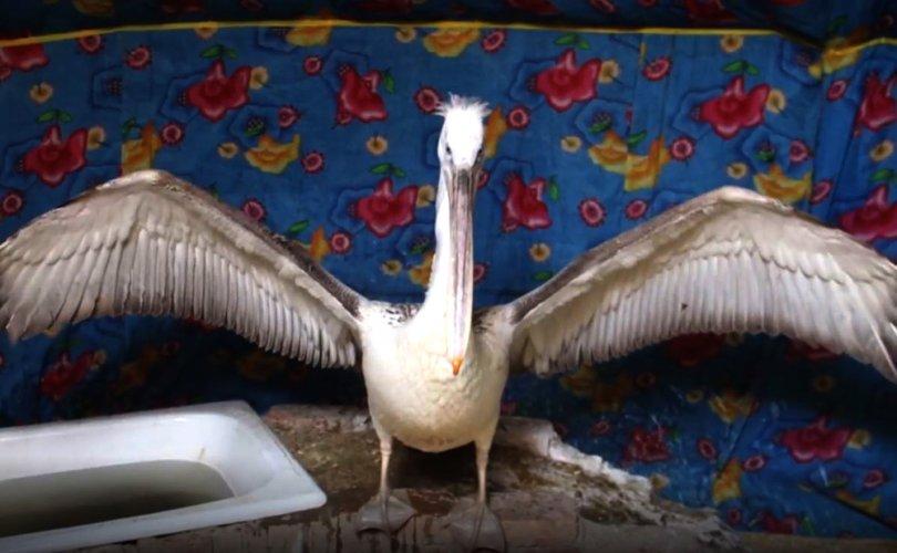 """""""Азхүү"""" нэртэй хотод шувуунд 1.6 сая төгрөг зарцуулжээ"""