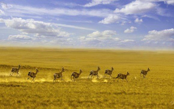 Дорнод Монголын талаар 36 градус хүрч халжээ