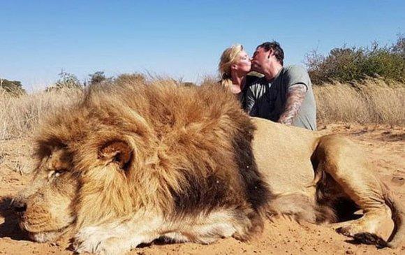 Агнасан арслангийнхаа дэргэд үнсэлцсэн зургаа авахуулсан хосыг шүүмжлэв