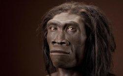 Индонезээс 1.8 сая жилийн настай эртний хүний үлдэгдэл олджээ