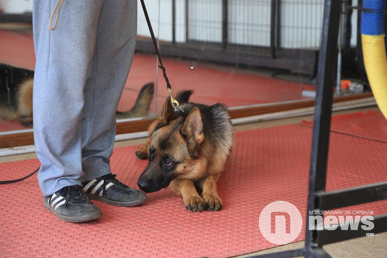 нохой сургагч 7