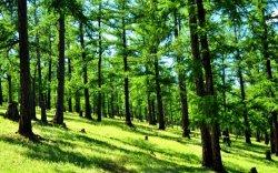 """""""Нийслэл хотод нэг сая мод ургуулахыг зорьж байна"""""""