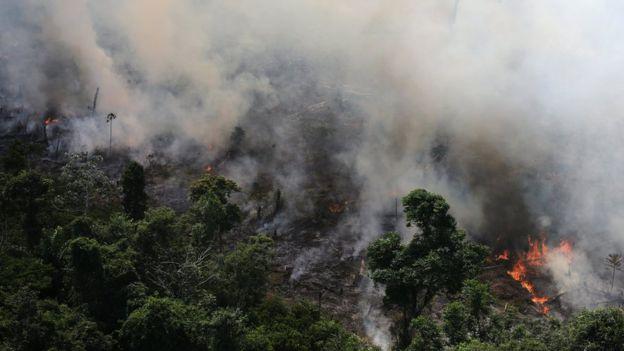 Амазоны ширэнгэн ой түймэрт нэрвэгджээ