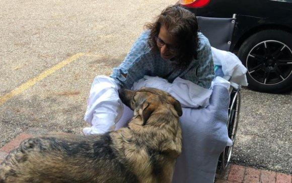 Нохойноосоо халдвар авсны улмаас хөл, гараа тайруулжээ