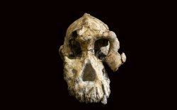 Этиопоос эртний хүний гавлын яс олджээ