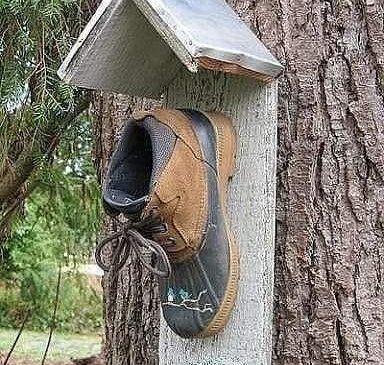 Гутлаар шувууны үүр хийж болдог