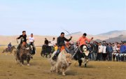 """Тайхарын талд """"Монгол сарлаг""""-2019 фестиваль өргөн дэлгэр боллоо"""