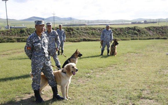 Эрэлч нохойг ашиглан эрэн хайх, аврах ажиллагааг зохион байгуулах боломжтой боллоо