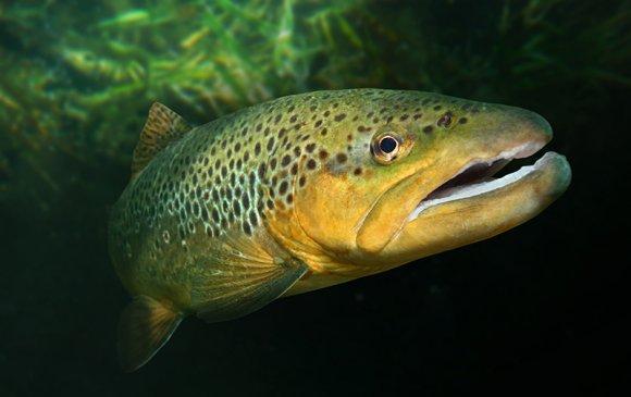 Quiz: Монгол орны загаснууд