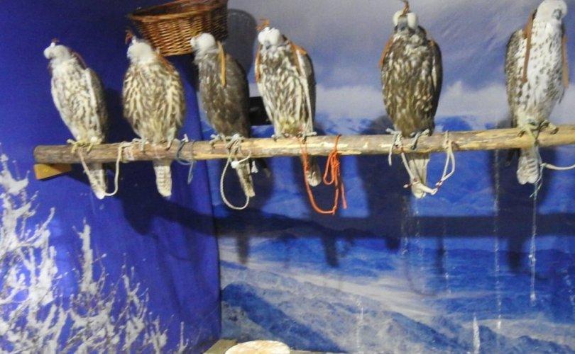 Идлэг шонхор шувууг  барихтай  холбоотой дараах зөрчил илэрчээ
