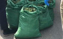 36.5 кг сэтгэцэд нөлөөлөх ургамал нийслэл рүү нэвтрүүлэхийг завджээ