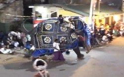 Шашны ёслолыг түйвээсэн заан 18 хүнийг гэмтээжээ