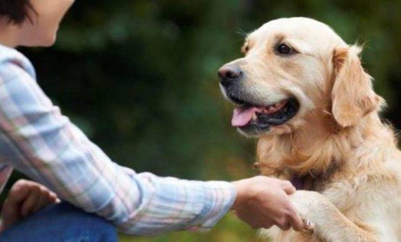 Гэрийн тэжээмэл амьтдыг эрүүл мэндийн үнэгүй үзлэгт хамруулжээ