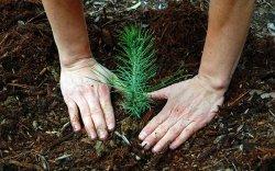 Өнөөдөр бүх нийтээр мод тарих өдөр