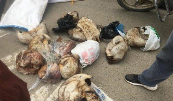 Хөлдөөсөн тарваганы мах Улаанбаатар хот руу нэвтрүүлэхийг завджээ