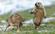 Зэрлэг ан амьтдын талаарх шилдэг гэрэл зургууд