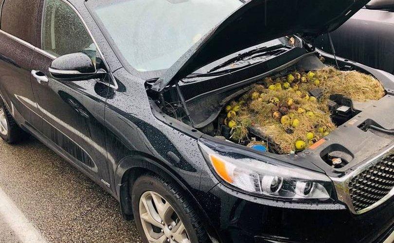 Жолооч эмэгтэй машинаас нь гарч байсан эвгүй үнэрийн шалтгааныг олжээ