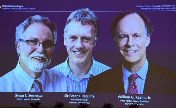 Хүчилтөрөгчөөр хүний биеийг эмчлэгчид Нобелийн шагнал хүртэв