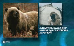 """""""Аав хүү хоёрын аминд хүрсэн баавгайг Сибирийнх гэдгийг хэлэх боломжгүй"""""""