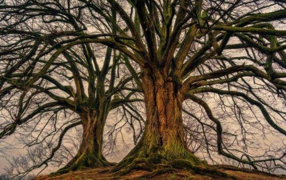Модод хөдөлдөг, бас уйлдаг