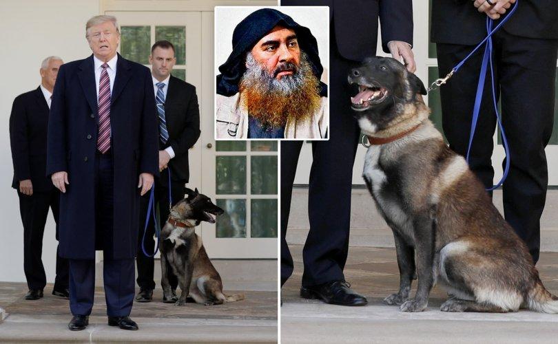 Гүйцэтгэх ажиллагаанд онцгой үүрэг гүйцэтгэсэн нохойг Трамп танилцуулав
