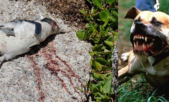Зэрлэг амьтан гэмтээсэн тэжээвэр амьтдыг устгаж, эзнийг нь торгоно