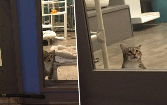 Эрэлхэг муур амьтны асрамжийнхныг залхаажээ