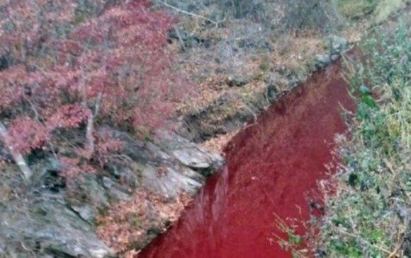 Солонгосын гол цусаар урсаж байна