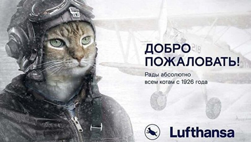 """""""Аэрофлот""""-ийн онгоцноос хөөгдсөн муур од болов"""