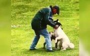 Нохойгоо зодсон эр шоронд сууж, амьтан тэжээх эрхээ хасуулна
