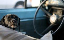 Нохой нэг цагийн турш машин жолооджээ