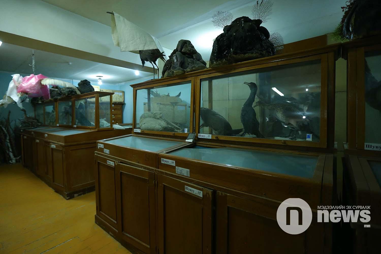 Байгалийн түүхийн музейн үзмэр хадгалалт (15)