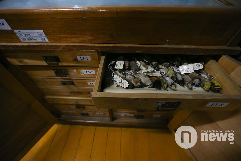 Байгалийн түүхийн музейн үзмэр хадгалалт (17)