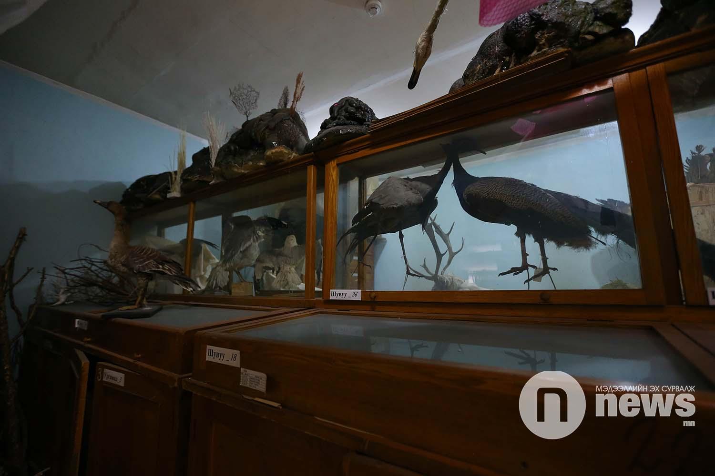 Байгалийн түүхийн музейн үзмэр хадгалалт (19)